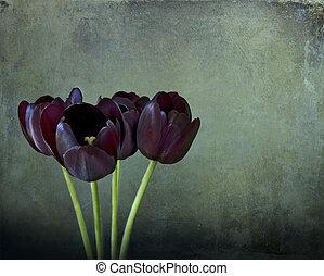 Floral still life, three black tulips on green texture