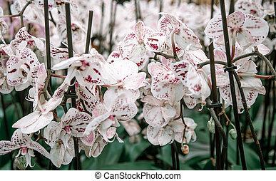 floral, texture., lotes, fundo, orquídea
