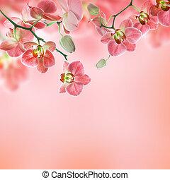 floral, tropical, plano de fondo, orquídeas