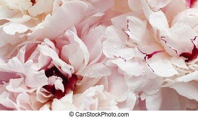floral, vacances, mariage, beau, arrière-plan pastel, ...