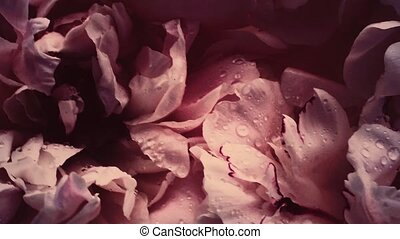 floral, vendange, pivoine, vacances, fleur, mariage, fleurs...