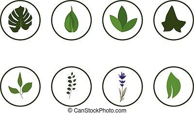 floral, verdor, iconos, en, círculo