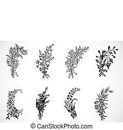 floral, vetorial, ornamentos