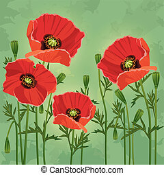Floral vintage background with flowers poppies