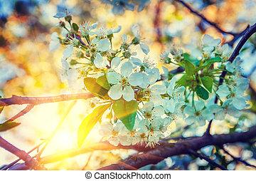 floral, vista, bloosom, de, árvore cereja, experiência, amanhecer, instagram, stile