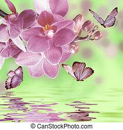 floral, vlinder, achtergrond, orchidee