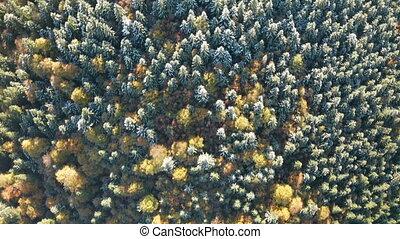 flore, beau, forêt, briller, au-dessus, voler, coloré, autmn, montagne, sunset.