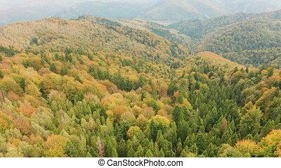 flore, beau, forêt, briller, au-dessus, voler, coloré, autmn...