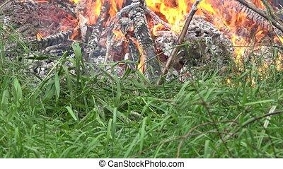 flore, brûler, nature., flamme, 4k, détruire, faune