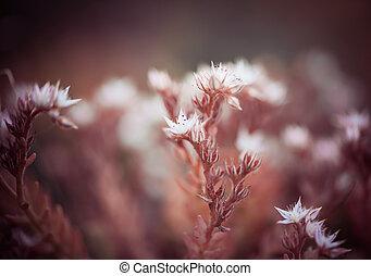 flore, closeup, jardin