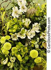 flore, vert
