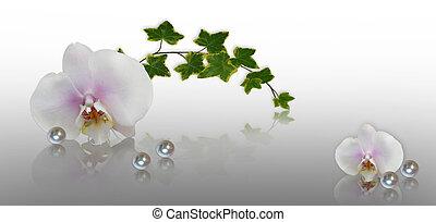 floreale, bello, bordo, orchidee
