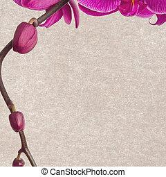 floreale, carta, fondo
