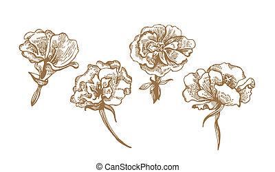 floreale, collezione