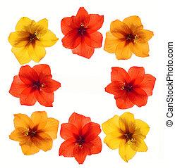 floreale, cornice, colorito