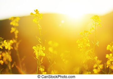 floreale, fondo,  wildflowers, naturale, giallo