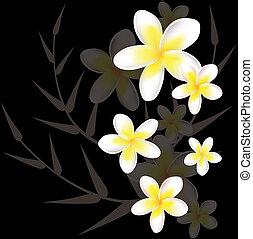 floreale, frangipani, astratto, vettore, fondo