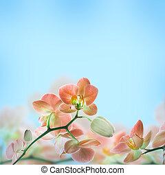floreale, tropicale, fondo, orchidee