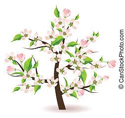 florecer, árbol, manzana