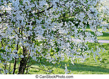 florecer, árbol