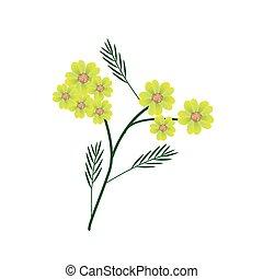 florecer, achillea, amarillo, milenrama, millefolium,...