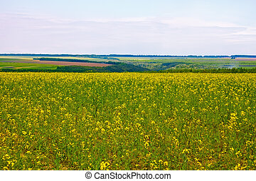 florecer, canola, campo