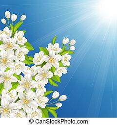 florecer, cereza