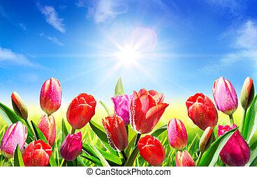 florecer, en, primavera