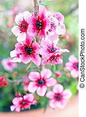 florecer, flores, en, primavera