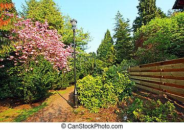florecer, rosa, cerezo, en el parque