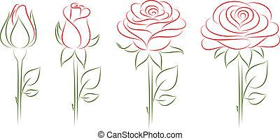 florecer, roses.