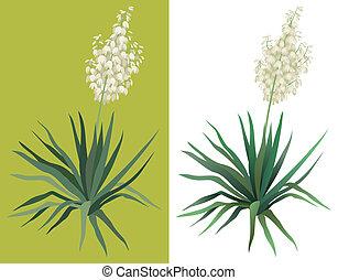 florecimiento, planta de yuca