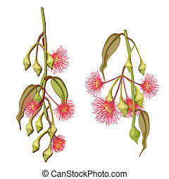 flores, árvore eucalipto