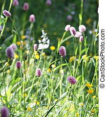 flores, 牧草地