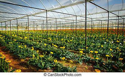 flores, 0020-planting, greenh