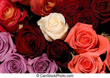 flores, 49
