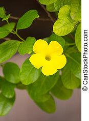 flores amarillas, wayside