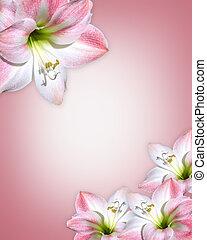 flores, amaryllis, cor-de-rosa, borda