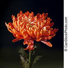 flores, arte, closeup., casório, feriado, cartão