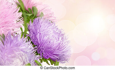 flores, aster