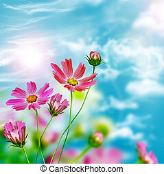 flores azuis, céu, fundo, margarida