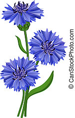 flores azuis, cornflower., illustration., vetorial
