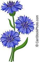 flores, azul, cornflower., vector, illustration.