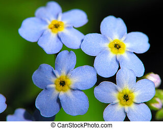 flores azules