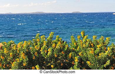 flores azules, mar, fondo amarillo