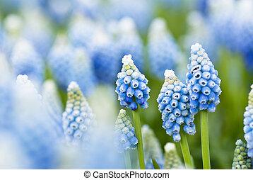 flores azules, plano de fondo