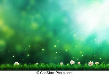 flores blancas, en, herboso, campo
