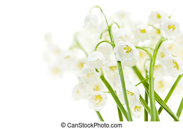 flores blancas, lirio de los valles
