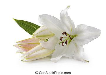 flores blancas, lirio