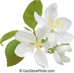 flores blancas, manzana